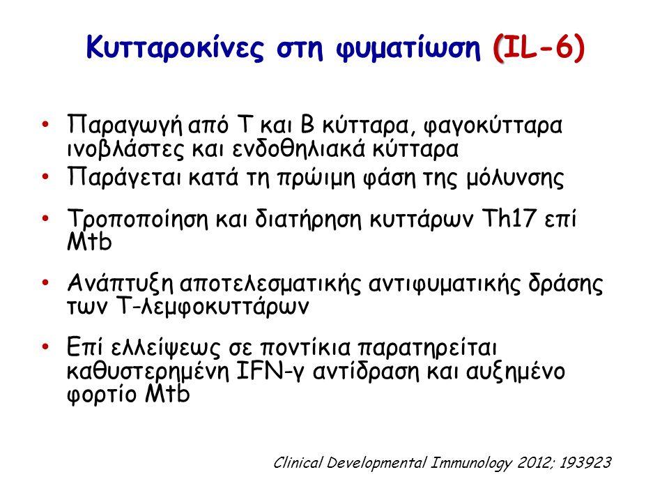 ( Κυτταροκίνες στη φυματίωση (IL-6) Παραγωγή από T και B κύτταρα, φαγοκύτταρα ινοβλάστες και ενδοθηλιακά κύτταρα Παράγεται κατά τη πρώιμη φάση της μόλ