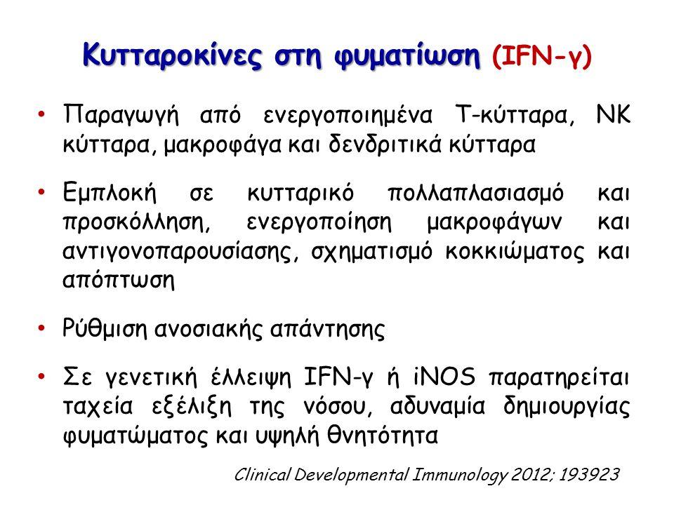 Κυτταροκίνες στη φυματίωση Κυτταροκίνες στη φυματίωση (IFN-γ) Παραγωγή από ενεργοποιημένα Τ-κύτταρα, ΝΚ κύτταρα, μακροφάγα και δενδριτικά κύτταρα Εμπλ