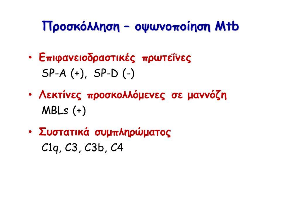 Προσκόλληση – οψωνοποίηση Mtb Επιφανειοδραστικές πρωτεΐνες SP-A (+), SP-D (-) Λεκτίνες προσκολλόμενες σε μαννόζη MBLs (+) Συστατικά συμπληρώματος C1q,