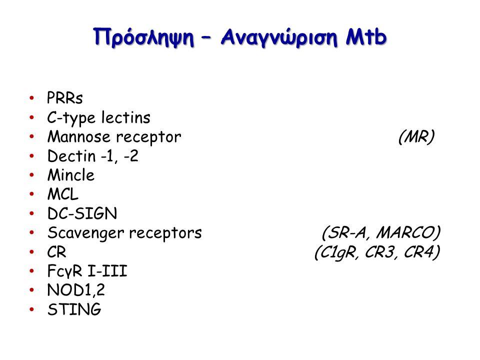 Πρόσληψη – Αναγνώριση Μtb PRRs C-type lectins Mannose receptor (MR) Dectin -1, -2 Mincle MCL DC-SIGN Scavenger receptors (SR-A, MARCO) CR (C1gR, CR3, CR4) FcγR I-III NOD1,2 STING