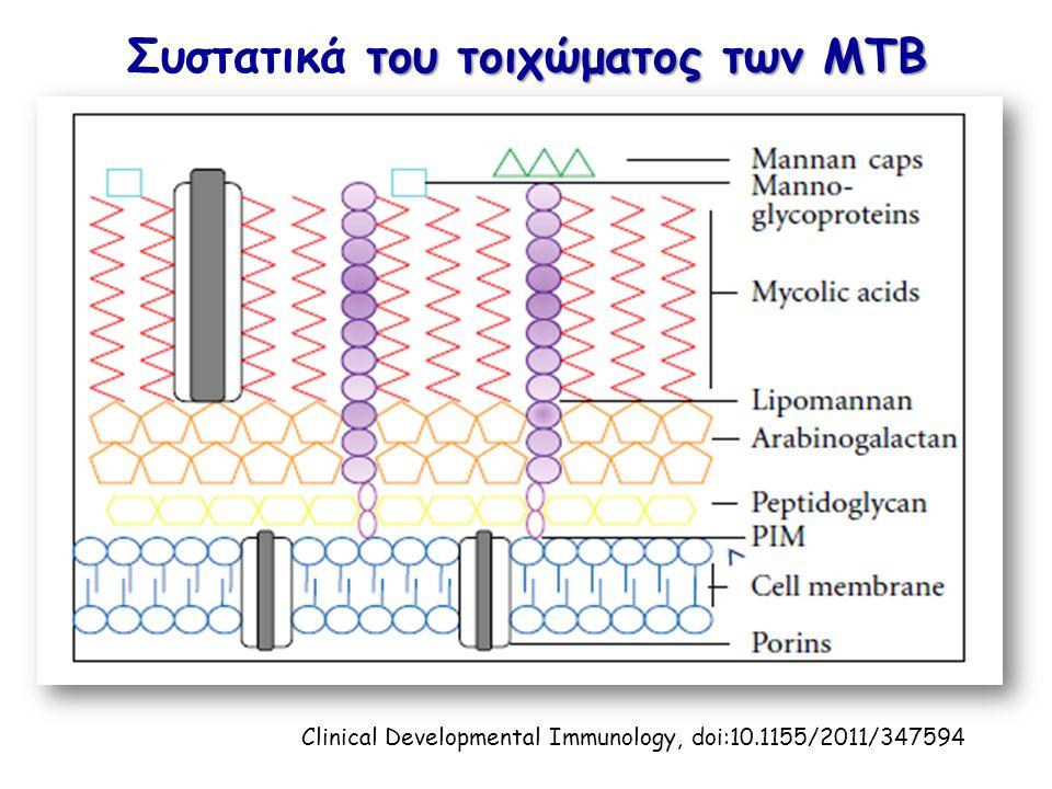 του τοιχώματος των ΜΤΒ Συστατικά του τοιχώματος των ΜΤΒ Clinical Developmental Immunology, doi:10.1155/2011/347594