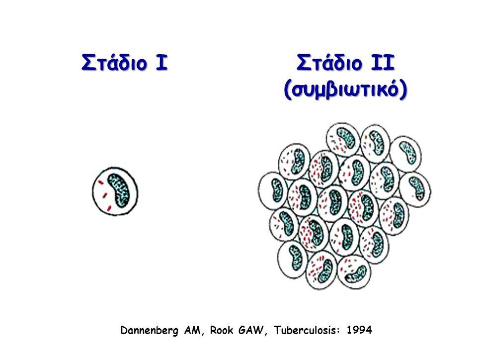 CD8 λεμφοκύτταρα Παραγωγή IFN-γ και IL-4 Κυτταροτοξικά Άμεσα μικροβιοκτόνα (granulysin, perforin) Ενεργός ΤΒ : CD4/CD8  ή  Βραδεία βελτίωση ΤΒ : CD8 Clin Microb Rev 2002; 294-309