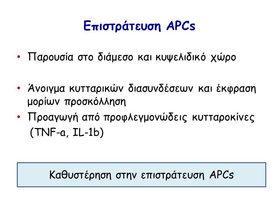 Επιστράτευση APCs Παρουσία στο διάμεσο και κυψελιδικό χώρο Άνοιγμα κυτταρικών διασυνδέσεων και έκφραση μορίων προσκόλληση Προαγωγή από προφλεγμονώδεις κυτταροκίνες (TNF-a, IL-1b) Καθυστέρηση στην επιστράτευση APCs
