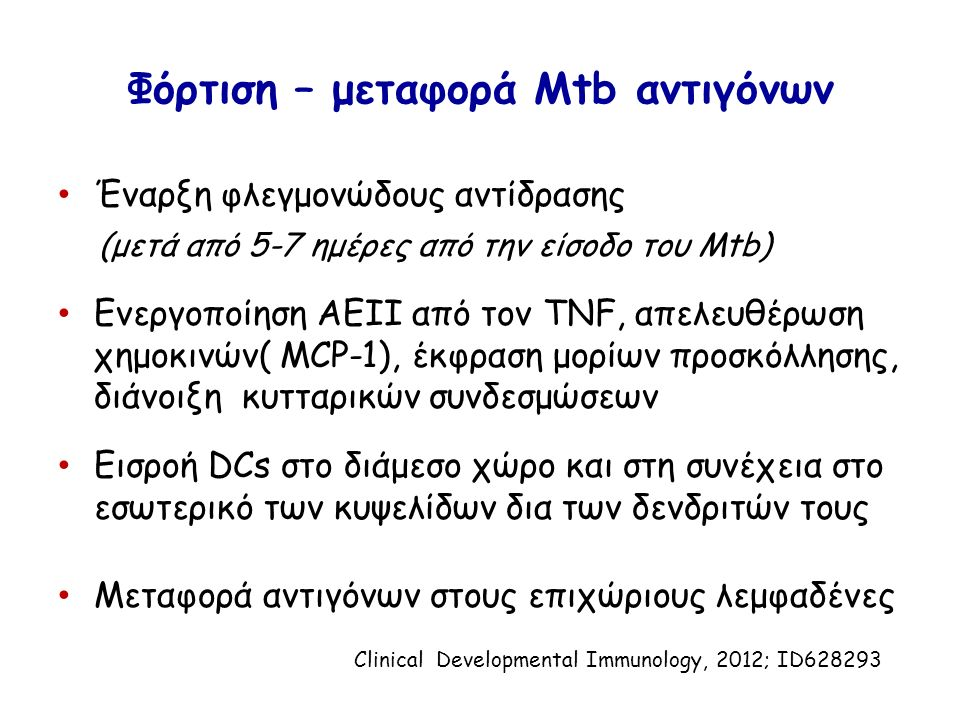 Φόρτιση – μεταφορά Mtb αντιγόνων Έναρξη φλεγμονώδους αντίδρασης (μετά από 5-7 ημέρες από την είσοδο του Mtb) Ενεργοποίηση AEII από τον TNF, απελευθέρωση χημοκινών( MCP-1), έκφραση μορίων προσκόλλησης, διάνοιξη κυτταρικών συνδεσμώσεων Εισροή DCs στο διάμεσο χώρο και στη συνέχεια στο εσωτερικό των κυψελίδων δια των δενδριτών τους Μεταφορά αντιγόνων στους επιχώριους λεμφαδένες Clinical Developmental Immunology, 2012; ID628293