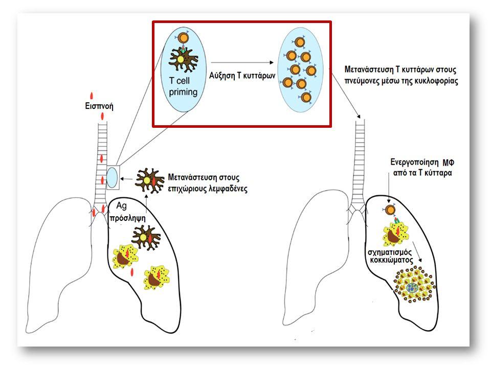 Αυτοφαγία-νέες θεραπευτικές προσεγγίσεις ΙΝΗ, PZA ROS Nitazoxanite, tizoxanite αναστολή mTORC1, ισχυρότερη της rapamysin, δράση σε αναπτυσσόμενα και μη Mtb Συμπλήρωμα βιταμίνης D μόνο σε πολυμορφισμό του TagIVDR