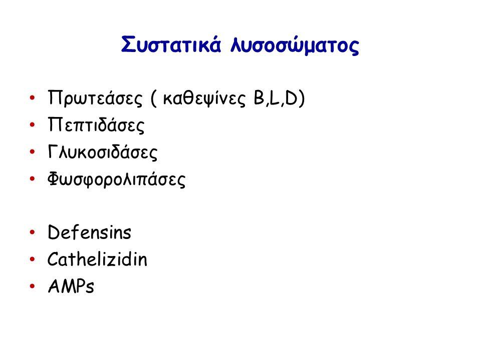 Συστατικά λυσοσώματος Πρωτεάσες ( καθεψίνες B,L,D) Πεπτιδάσες Γλυκοσιδάσες Φωσφορολιπάσες Defensins Cathelizidin AMPs