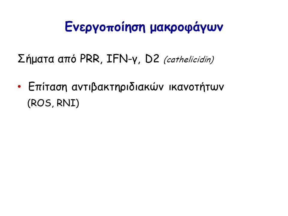Ενεργοποίηση μακροφάγων Σήματα από PRR, IFN-γ, D2 (cathelicidin) Επίταση αντιβακτηριδιακών ικανοτήτων (ROS, RNI)