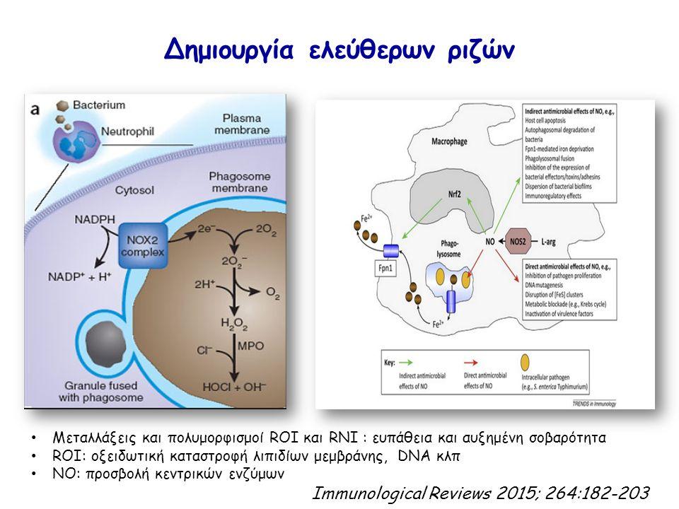 Δημιουργία ελεύθερων ριζών Μεταλλάξεις και πολυμορφισμοί ROI και RNI : ευπάθεια και αυξημένη σοβαρότητα ROI: οξειδωτική καταστροφή λιπιδίων μεμβράνης, DNA κλπ ΝΟ: προσβολή κεντρικών ενζύμων Immunological Reviews 2015; 264:182-203