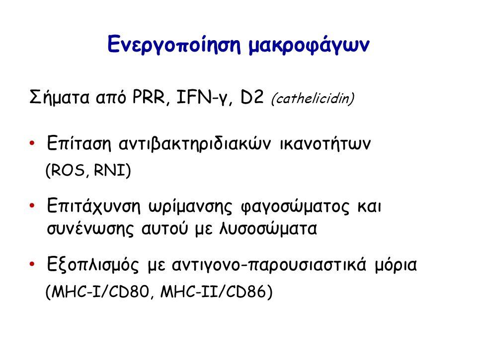 Ενεργοποίηση μακροφάγων Σήματα από PRR, IFN-γ, D2 (cathelicidin) Επίταση αντιβακτηριδιακών ικανοτήτων (ROS, RNI) Επιτάχυνση ωρίμανσης φαγοσώματος και συνένωσης αυτού με λυσοσώματα Εξοπλισμός με αντιγονο-παρουσιαστικά μόρια (MHC-I/CD80, MHC-II/CD86)