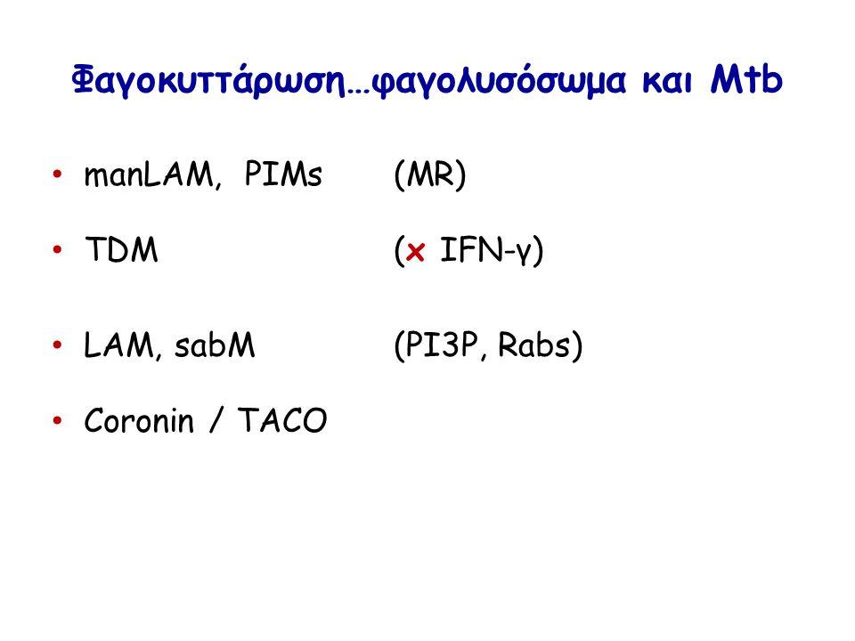 Φαγοκυττάρωση…φαγολυσόσωμα και Mtb manLAM, PIMs(MR) TDM(x IFN-γ) LAM, sabM(PI3P, Rabs) Coronin / TACO
