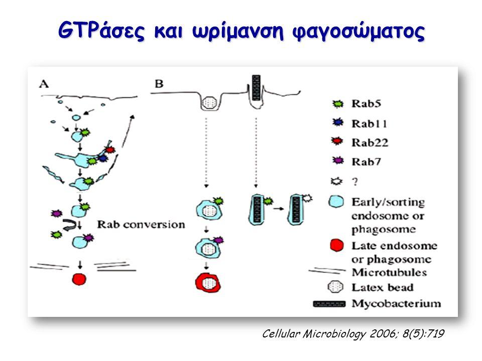 GTPάσες και ωρίμανση φαγοσώματος Cellular Microbiology 2006; 8(5):719