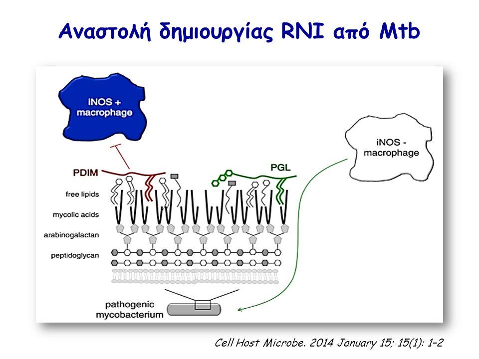 Αναστολή δημιουργίας RNI από Mtb Cell Host Microbe. 2014 January 15; 15(1): 1–2