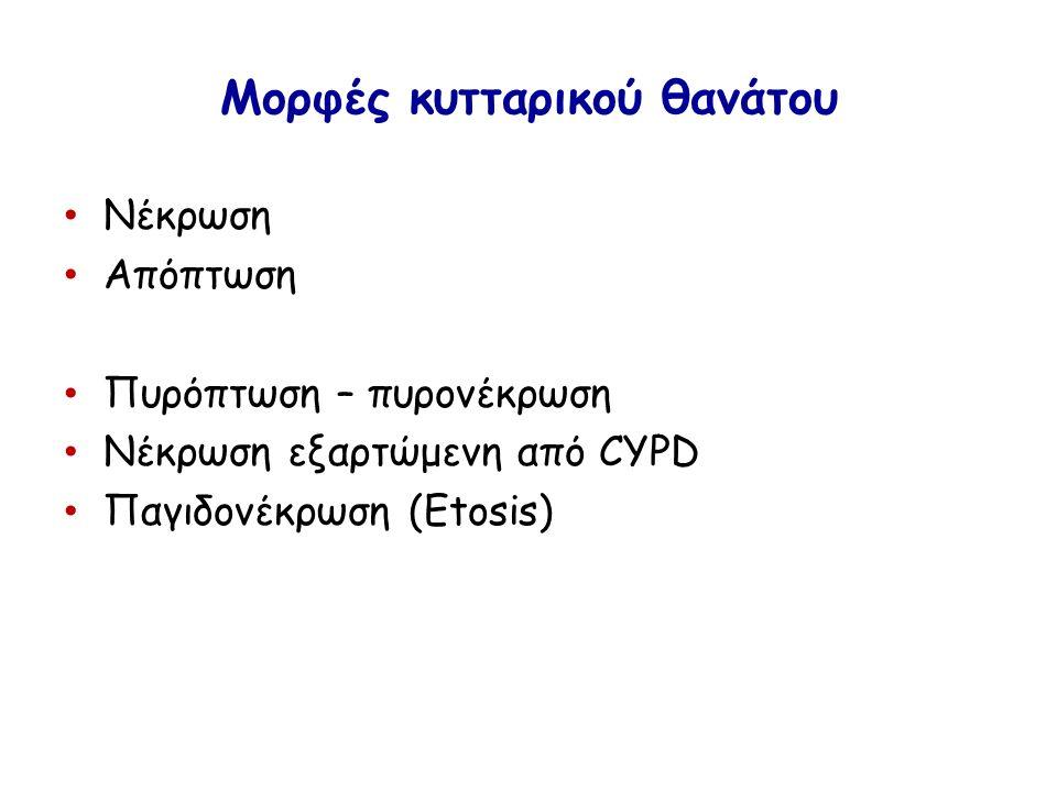 Μορφές κυτταρικού θανάτου Νέκρωση Απόπτωση Πυρόπτωση – πυρονέκρωση Νέκρωση εξαρτώμενη από CYPD Παγιδονέκρωση (Etosis)