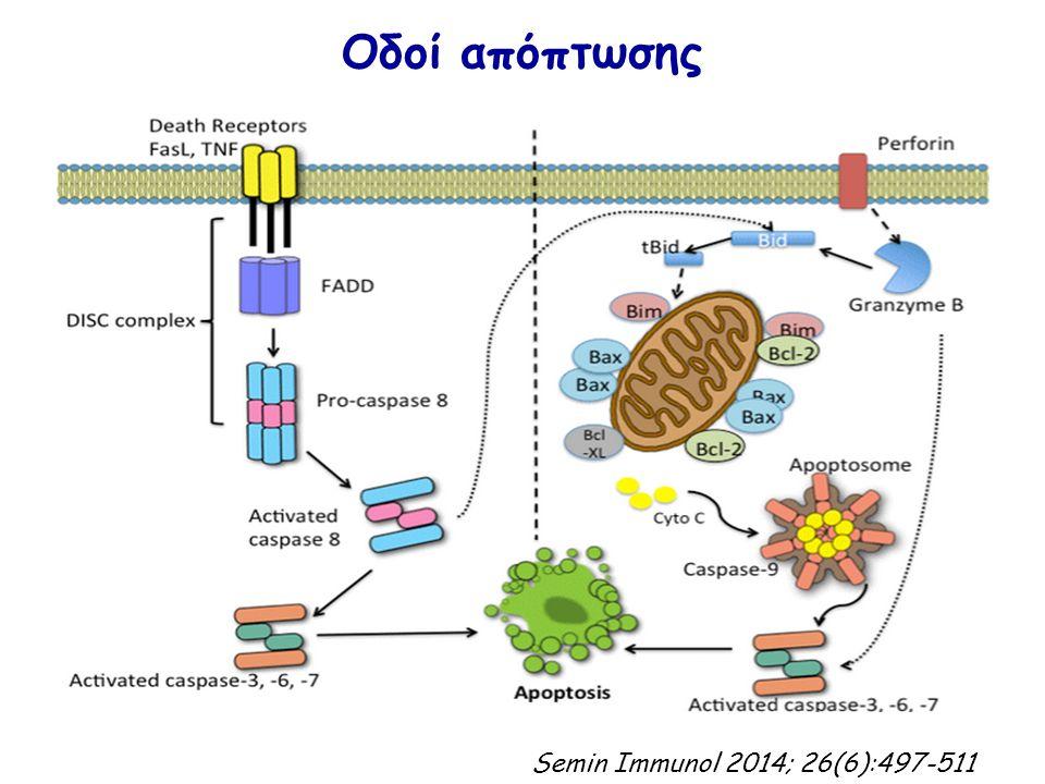 Οδοί απόπτωσης Semin Immunol 2014; 26(6):497-511