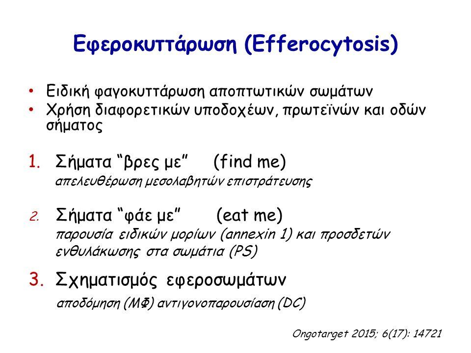 """Εφεροκυττάρωση (Efferocytosis) Ειδική φαγοκυττάρωση αποπτωτικών σωμάτων Χρήση διαφορετικών υποδοχέων, πρωτεϊνών και οδών σήματος 1.Σήματα """"βρες με"""" (f"""