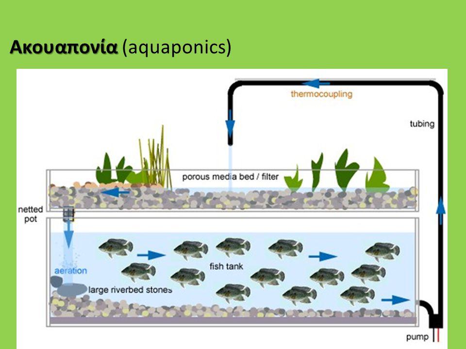 Ακουαπονία Ακουαπονία (aquaponics)