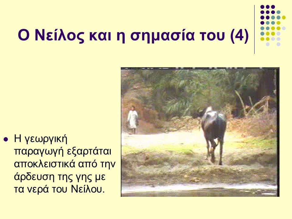 Ο Νείλος και η σημασία του (4) Η γεωργική παραγωγή εξαρτάται αποκλειστικά από την άρδευση της γης με τα νερά του Νείλου.