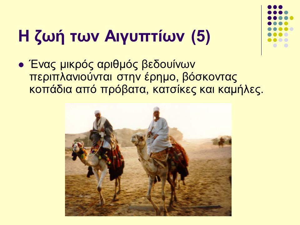 Η ζωή των Αιγυπτίων (5) Ένας μικρός αριθμός βεδουίνων περιπλανιούνται στην έρημο, βόσκοντας κοπάδια από πρόβατα, κατσίκες και καμήλες.