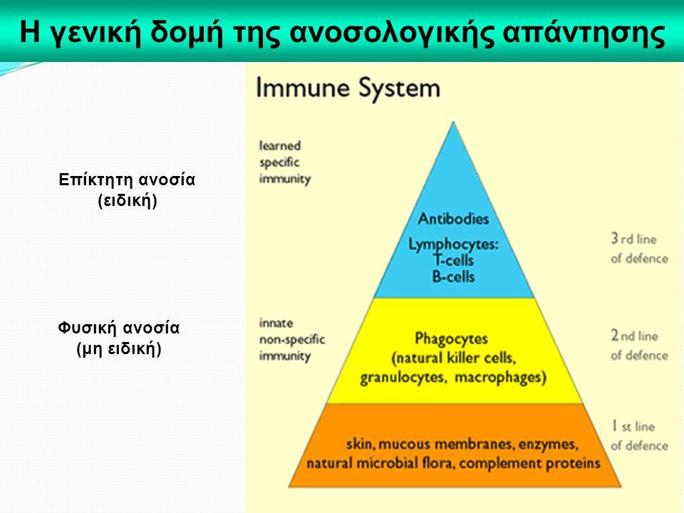 Η γενική δομή της ανοσολογικής απάντησης Φυσική ανοσία (μη ειδική) Επίκτητη ανοσία (ειδική)