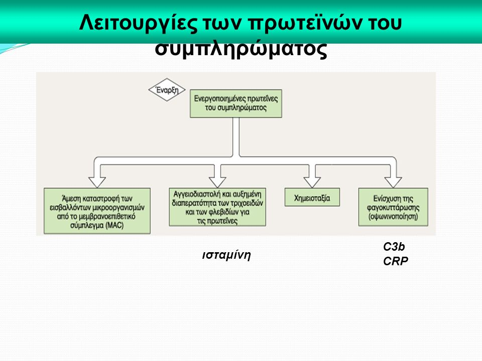 Λειτουργίες των πρωτεϊνών του συμπληρώματος C3b CRP ισταμίνη