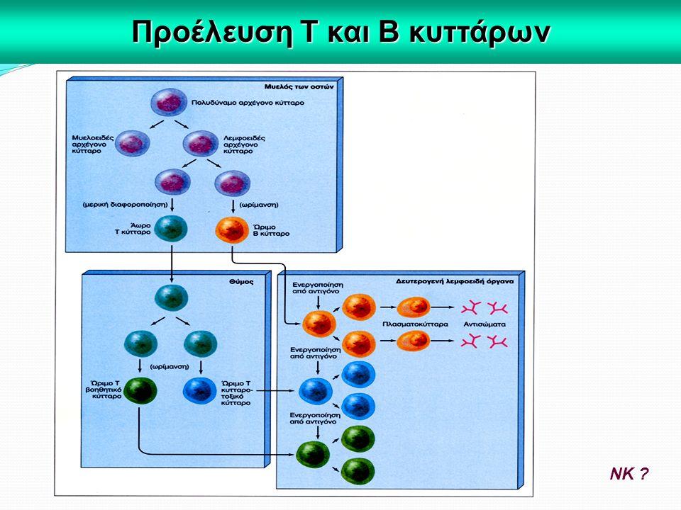 Προέλευση Τ και Β κυττάρων ΝΚ ?
