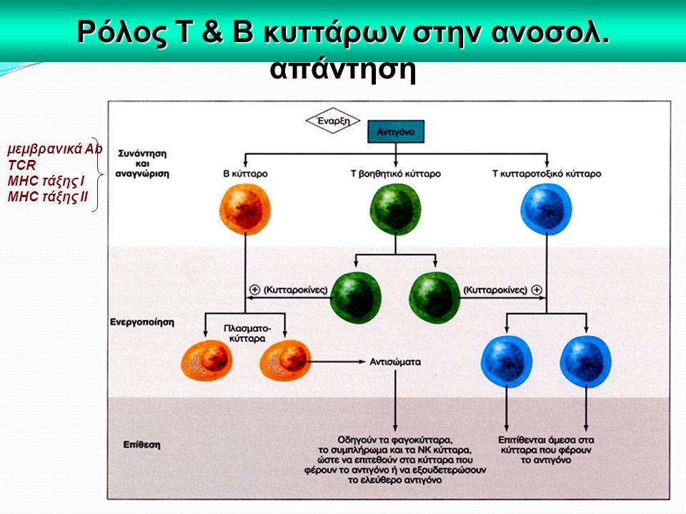 Ρόλος Τ & Β κυττάρων στην ανοσολ. απάντηση μεμβρανικά Αb TCR MHC τάξης Ι MHC τάξης ΙΙ