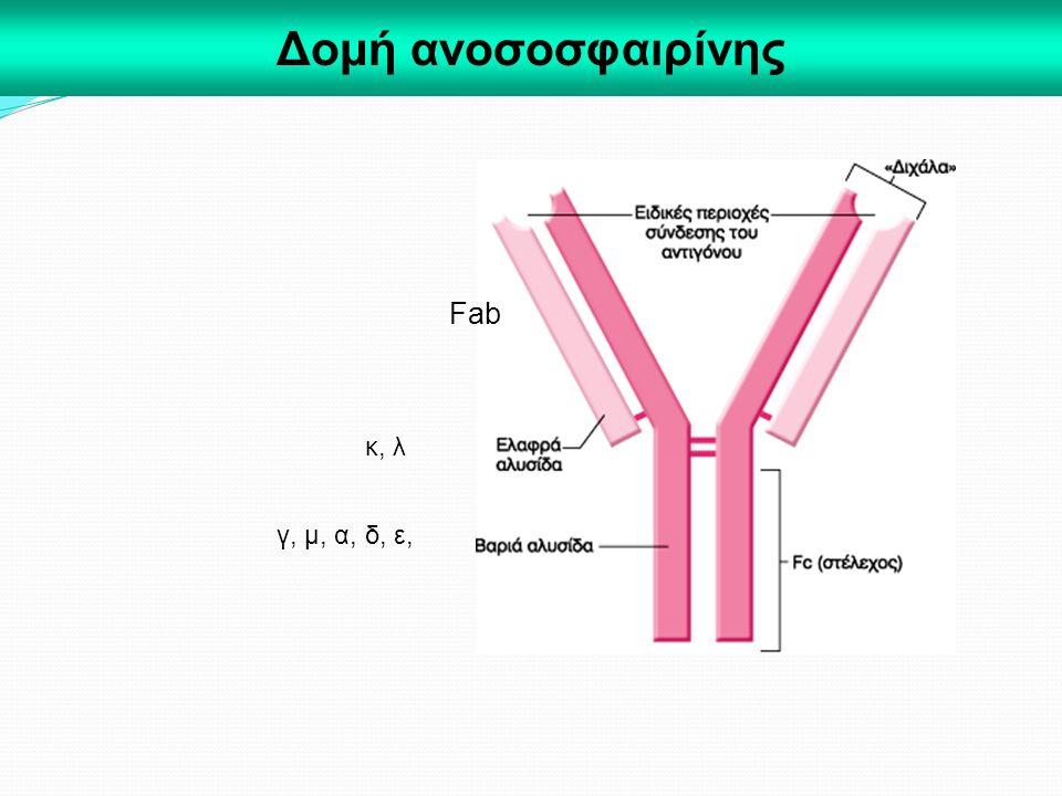 Δομή ανοσοσφαιρίνης Fab γ, μ, α, δ, ε, κ, λ