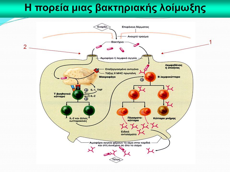 Η πορεία μιας βακτηριακής λοίμωξης 1 2