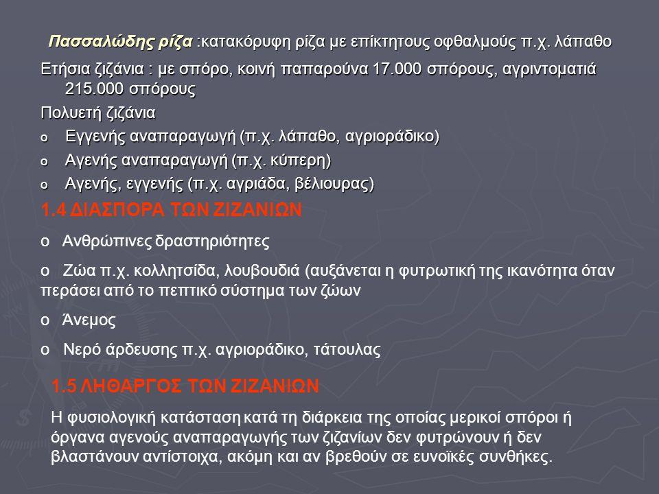 Πασσαλώδης ρίζα :κατακόρυφη ρίζα με επίκτητους οφθαλμούς π.χ.