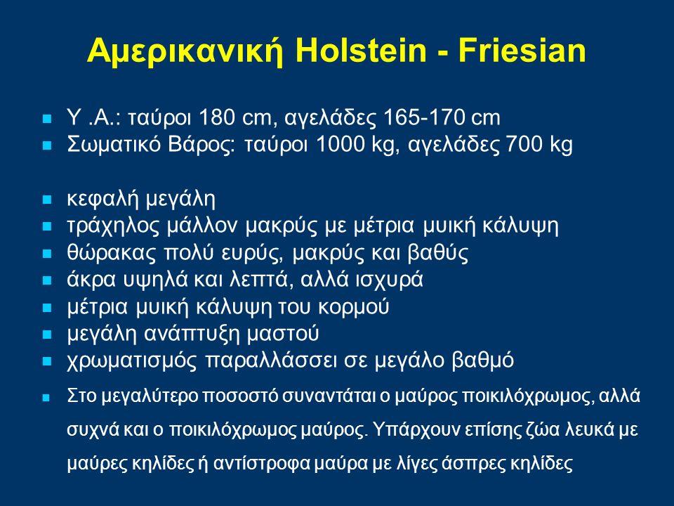 Αμερικανική Holstein - Friesian Υ.Α.: ταύροι 180 cm, αγελάδες 165-170 cm Σωματικό Βάρος: ταύροι 1000 kg, αγελάδες 700 kg κεφαλή μεγάλη τράχηλος μάλλον μακρύς με μέτρια μυική κάλυψη θώρακας πολύ ευρύς, μακρύς και βαθύς άκρα υψηλά και λεπτά, αλλά ισχυρά μέτρια μυική κάλυψη του κορμού μεγάλη ανάπτυξη μαστού χρωματισμός παραλλάσσει σε μεγάλο βαθμό Στο μεγαλύτερο ποσοστό συναντάται ο μαύρος ποικιλόχρωμος, αλλά συχνά και ο ποικιλόχρωμος μαύρος.