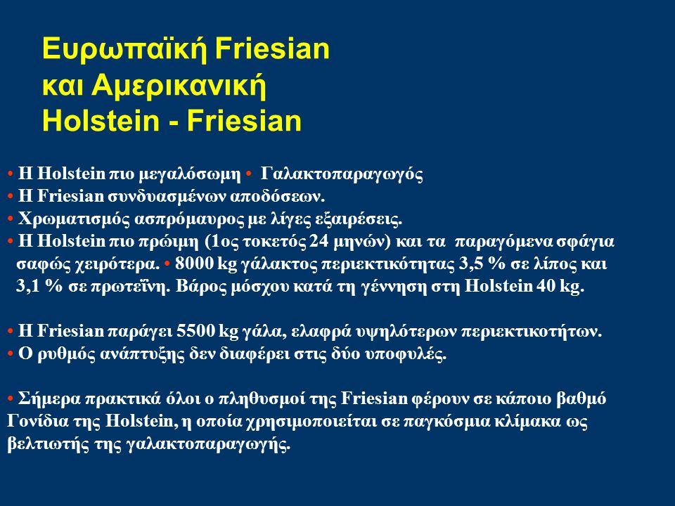 Ευρωπαϊκή Friesian και Αμερικανική Holstein - Friesian Η Holstein πιο μεγαλόσωμη Γαλακτοπαραγωγός Η Friesian συνδυασμένων αποδόσεων. Χρωματισμός ασπρό