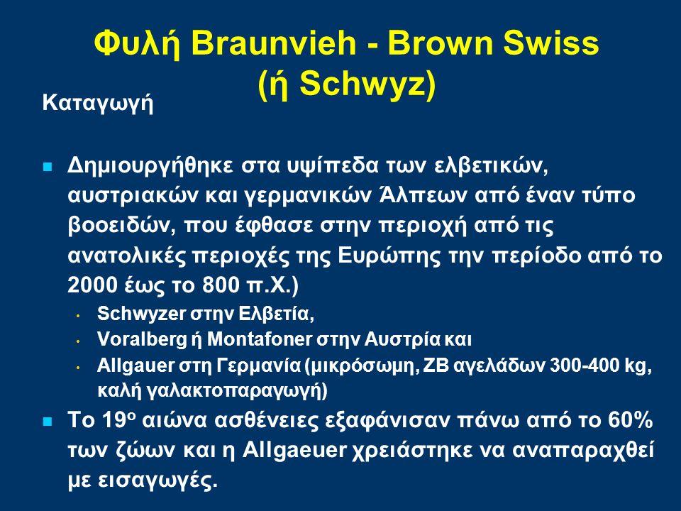 Φυλή Braunvieh - Brown Swiss (ή Schwyz) Καταγωγή Δημιουργήθηκε στα υψίπεδα των ελβετικών, αυστριακών και γερμανικών Άλπεων από έναν τύπο βοοειδών, που έφθασε στην περιοχή από τις ανατολικές περιοχές της Ευρώπης την περίοδο από το 2000 έως το 800 π.Χ.) Schwyzer στην Ελβετία, Voralberg ή Montafoner στην Αυστρία και Allgauer στη Γερμανία (μικρόσωμη, ΖΒ αγελάδων 300-400 kg, καλή γαλακτοπαραγωγή) Το 19 ο αιώνα ασθένειες εξαφάνισαν πάνω από το 60% των ζώων και η Allgaeuer χρειάστηκε να αναπαραχθεί με εισαγωγές.