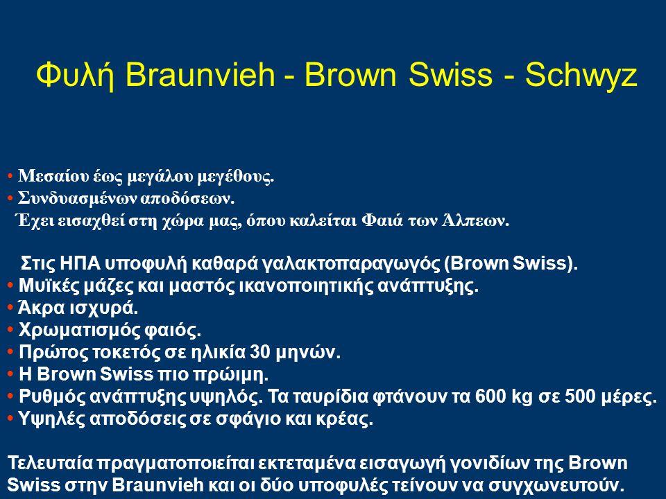 Φυλή Braunvieh - Brown Swiss - Schwyz Μεσαίου έως μεγάλου μεγέθους. Συνδυασμένων αποδόσεων. Έχει εισαχθεί στη χώρα μας, όπου καλείται Φαιά των Άλπεων.