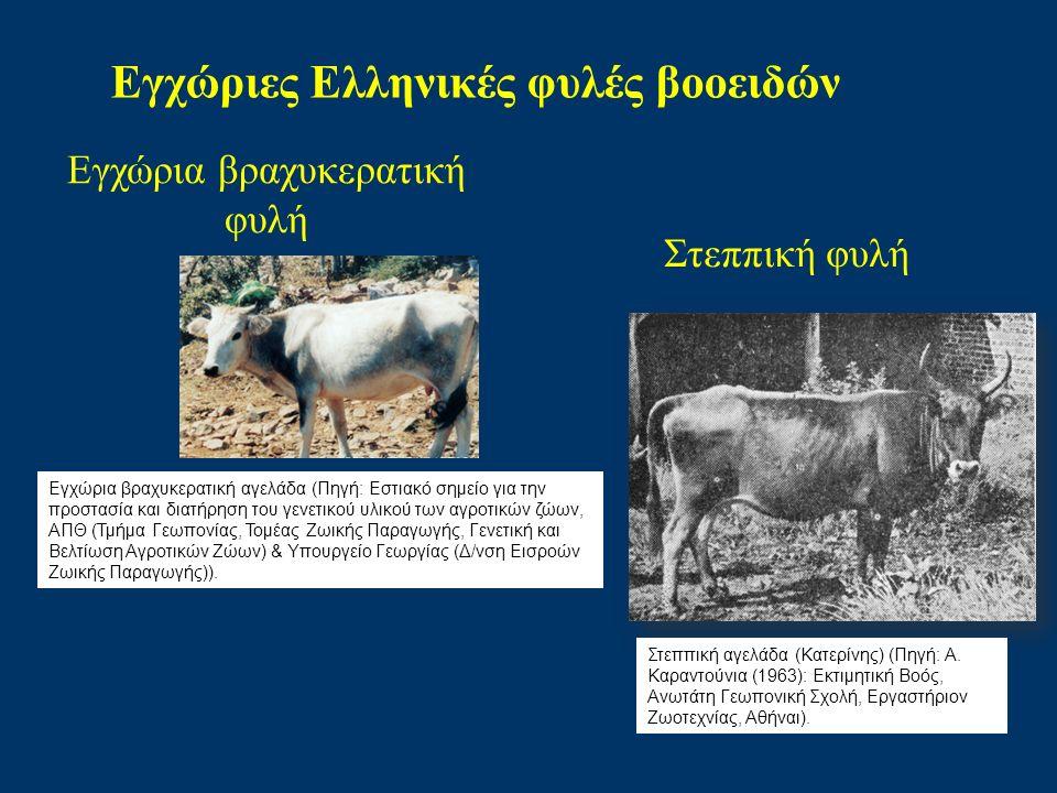 Εγχώριες Ελληνικές φυλές βοοειδών Εγχώρια βραχυκερατική φυλή Στεππική φυλή Εγχώρια βραχυκερατική αγελάδα (Πηγή: Εστιακό σημείο για την προστασία και διατήρηση του γενετικού υλικού των αγροτικών ζώων, ΑΠΘ (Τμήμα Γεωπονίας, Τομέας Ζωικής Παραγωγής, Γενετική και Βελτίωση Αγροτικών Ζώων) & Υπουργείο Γεωργίας (Δ/νση Εισροών Ζωικής Παραγωγής)).