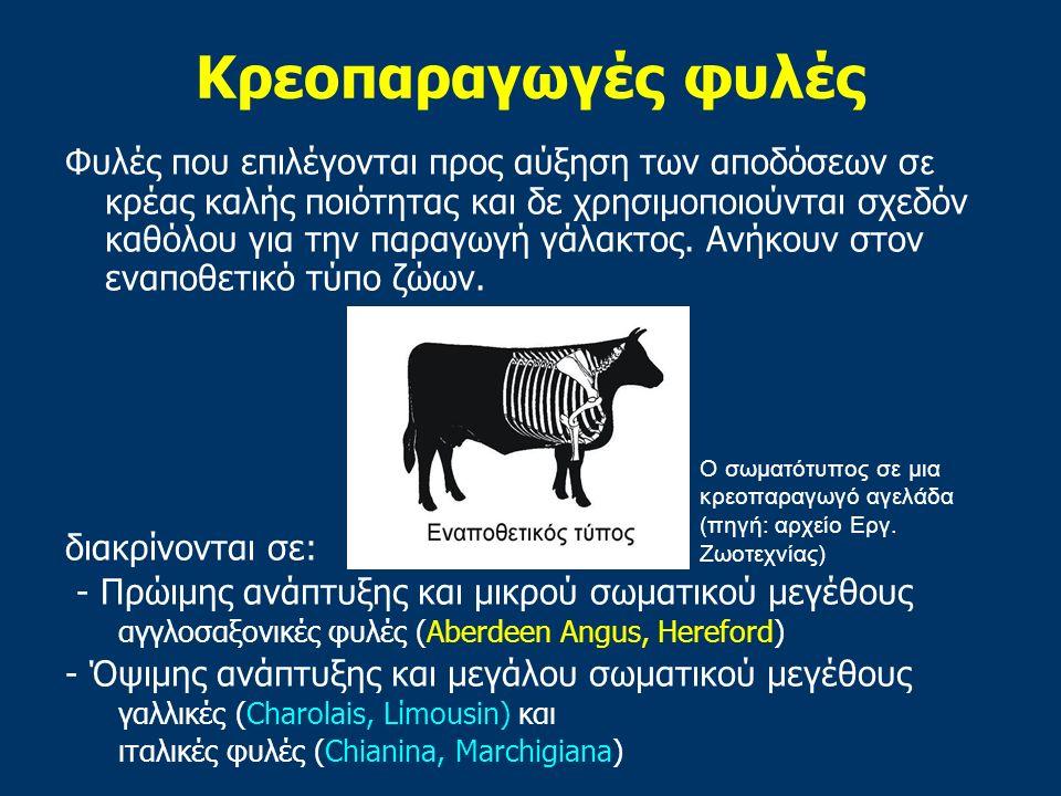 Κρεοπαραγωγές φυλές Φυλές που επιλέγονται προς αύξηση των αποδόσεων σ ε κρέας καλής ποιότητας και δε χρησιμοποιούνται σχεδόν καθόλου για την παραγωγή γάλακτος.