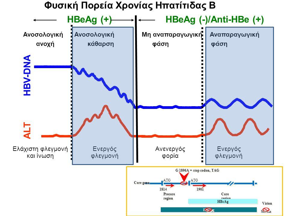 HBeAg (+) HBeAg (-)/Anti-HBe (+) ALT HBV-DNA Φυσική Πορεία Χρονίας Ηπατίτιδας Β Ανοσολογική Ανοσολογική Μη αναπαραγωγική Αναπαραγωγική ανοχή κάθαρση φάση φάση Ελάχιστη φλεγμονή και ίνωση Ενεργός φλεγμονή Ανενεργός φορία Ενεργός φλεγμονή 1814 1901 Precore Coreregion region HBcAg HBeAgHBeAg G 1896A = stop codon, TAG ATG Virion Serum Core gene