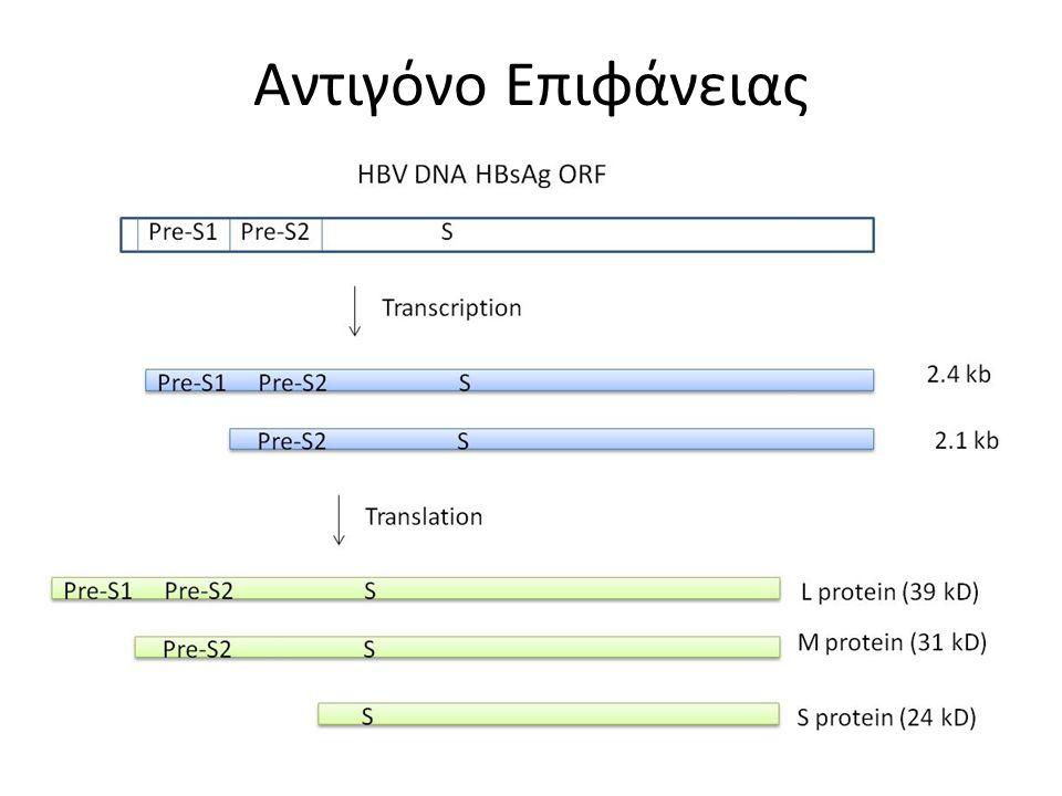 Στάδιο Νόσου Διαγνωστικά Κριτήρια Χρόνια Ηπατίτιδα Β  HBsAg+ > 6 μήνες  HBV DNA > 20,000 IU/mL (10 5 copies/mL),  2000-20,000 IU/mL (10 4 -10 5 copies/mL) συχνότερα σε HBeAg-  ↑ ή διαλειπόντως ↑ ALT/AST  Βιοψία με > μέτρια νεκροφλεγμονή Ανενεργός HBsAg φορία  HBsAg+ > 6 μήνες  HBeAg-, anti-HBe+  HBV DNA < 2000 IU/mL  Κ.Φ.