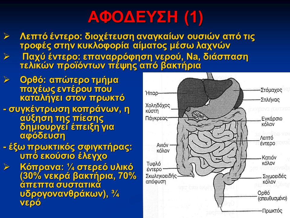ΑΦΟΔΕΥΣΗ (1)  Λεπτό έντερο: διοχέτευση αναγκαίων ουσιών από τις τροφές στην κυκλοφορία αίματος μέσω λαχνών  Παχύ έντερο: επαναρρόφηση νερού, Na, διάσπαση τελικών προϊόντων πέψης από βακτήρια  Ορθό: απώτερο τμήμα παχέως εντέρου που καταλήγει στον πρωκτό - συγκέντρωση κοπράνων, η αύξηση της πίεσης δημιουργεί έπειξη για αφόδευση - έξω πρωκτικός σφιγκτήρας: υπό εκούσιο έλεγχο  Κόπρανα: ¼ στερεό υλικό (30% νεκρά βακτήρια, 70% άπεπτα συστατικά υδρογονανθράκων), ¾ νερό