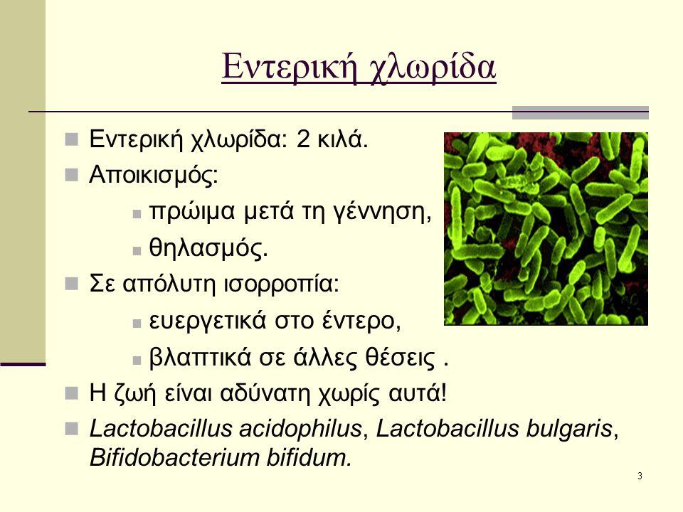 3 Εντερική χλωρίδα Εντερική χλωρίδα: 2 κιλά. Αποικισμός: πρώιμα μετά τη γέννηση, θηλασμός. Σε απόλυτη ισορροπία: ευεργετικά στο έντερο, βλαπτικά σε άλ