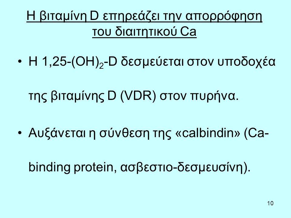 10 Η βιταμίνη D επηρεάζει την απορρόφηση του διαιτητικού Ca Η 1,25-(OH) 2 -D δεσμεύεται στον υποδοχέα της βιταμίνης D (VDR) στον πυρήνα.