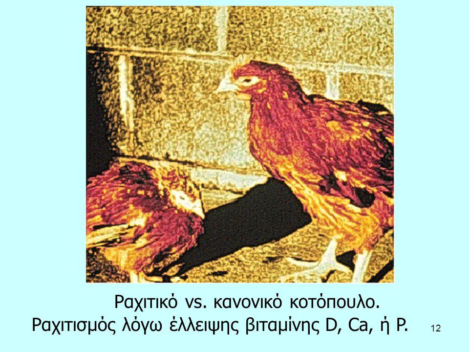 12 Ραχιτικό vs. κανονικό κοτόπουλο. Ραχιτισμός λόγω έλλειψης βιταμίνης D, Ca, ή P.