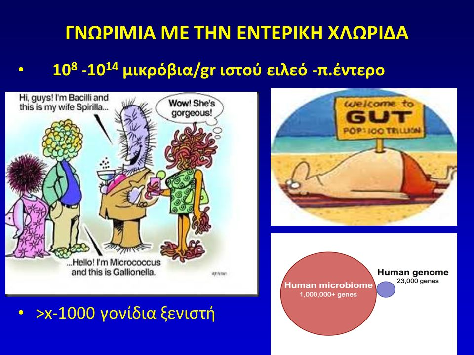 ΔΥΣΒΙΩΣΗ ΣΕ ΙΦΝΕ  Εμπλουτισμός με είδη Proteobacteria, Bacteroidetes  Ελάττωση ειδών Firmicutes («ευεργετικά»)  Διαταραχές στα μικρόβια του αυλού και του επιθηλίου B.FRAGILIS Firmicutes: EREC - FPraus ΑΛΛΑ Swidinski A, J Phys Pharm 2009
