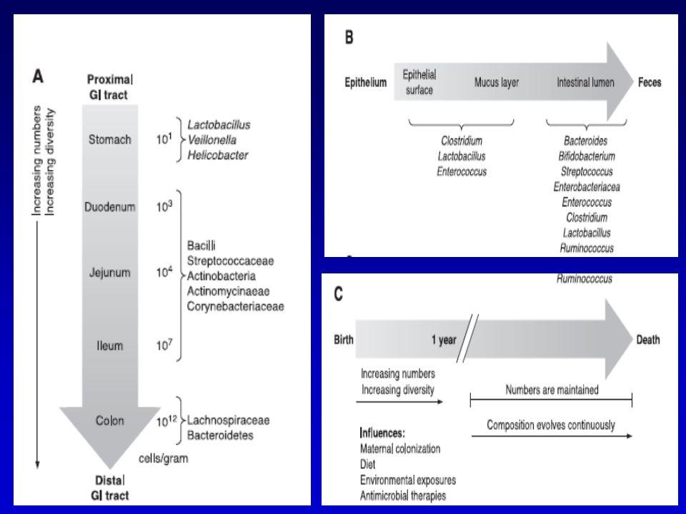 Λιπαρά οξέα μικρής αλύσου (SCFA) FirmicutesBacteroidetes Άπεπτες φυτικές ίνες Ενεργειακή τροφοδοσία εντερικού επιθηλίου Ακεραιότητα επιθηλιακού φραγμού   ΙΦΝΕ Υπερανάπτυξη μικροβίων που ανάγουν τα θειικά σε θειούχα Υπερπαραγωγή H2S  ΙΦΝΕ Μεταβολικές συνέπειες δυσβίωσης Sands B, J Gastro 2007/Sokol H, Curr Opin Gastro 2010/Klapproth JM, IBD 2010