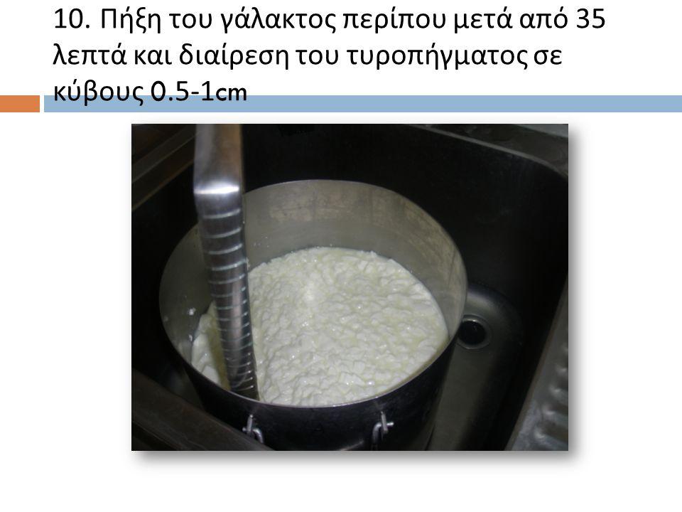 10. Πήξη του γάλακτος περίπου μετά από 35 λεπτά και διαίρεση του τυροπήγματος σε κύβους 0.5-1cm