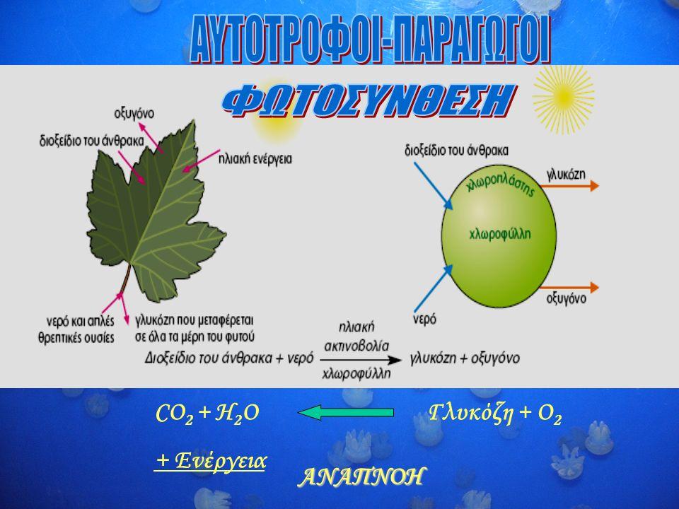 Γλυκόζη + O 2 CO 2 + H 2 O + Ενέργεια ΑΝΑΠΝΟΗ