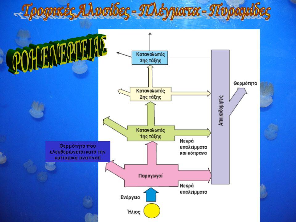 Θερμότητα που ελευθερώνεται κατά την κυτταρική αναπνοή