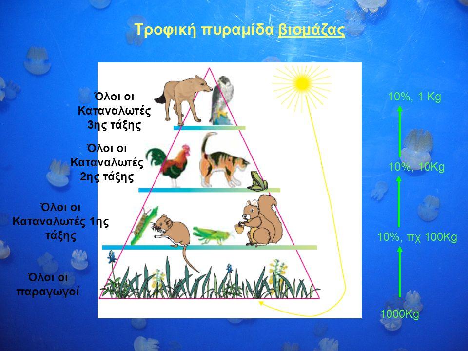 Τροφική πυραμίδα βιομάζας Όλοι οι παραγωγοί Όλοι οι Καταναλωτές 1ης τάξης Όλοι οι Καταναλωτές 2ης τάξης Όλοι οι Καταναλωτές 3ης τάξης 10%, πχ 100Kg 10%, 10Kg 10%, 1 Kg 1000Kg