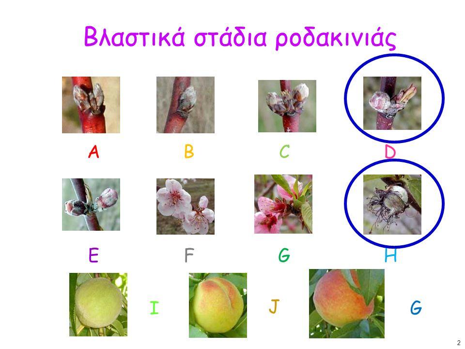 Βλαστικά στάδια ροδακινιάς ΑΒCD J IG ΕFGH 2