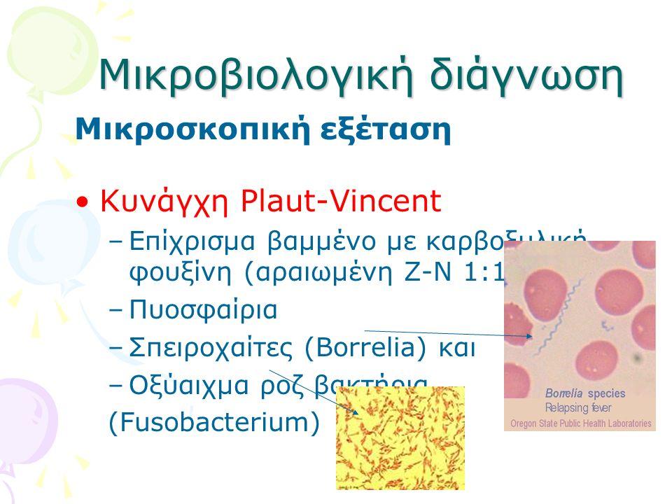 Μικροβιολογική διάγνωση Μικροσκοπική εξέταση Κυνάγχη Plaut-Vincent –Επίχρισμα βαμμένο με καρβοξυλική φουξίνη (αραιωμένη Ζ-Ν 1:10 με νερό) –Πυοσφαίρια
