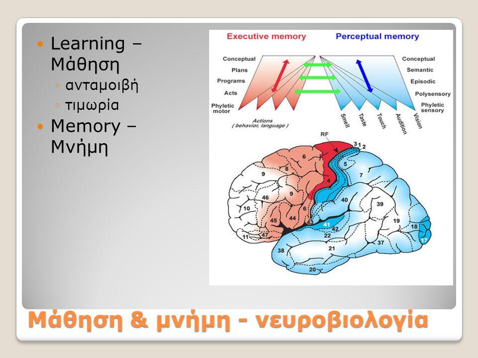 Μάθηση & μνήμη - νευροβιολογία Learning – Μάθηση ◦ανταμοιβή ◦τιμωρία Memory – Μνήμη
